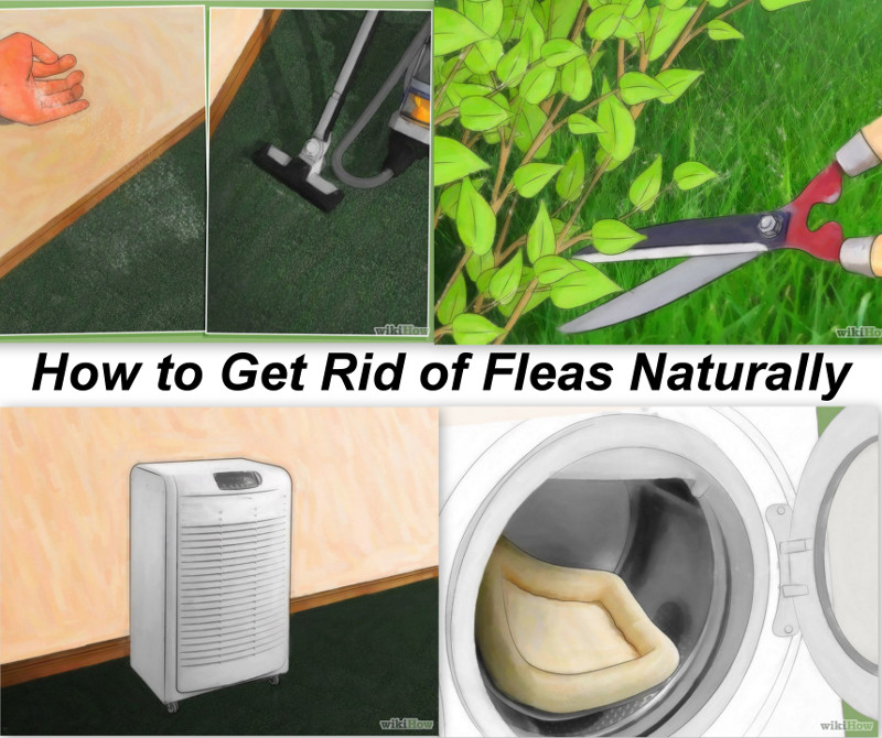 copyrights: http://www.wikihow.com/Get-Rid-of-Fleas-Naturally