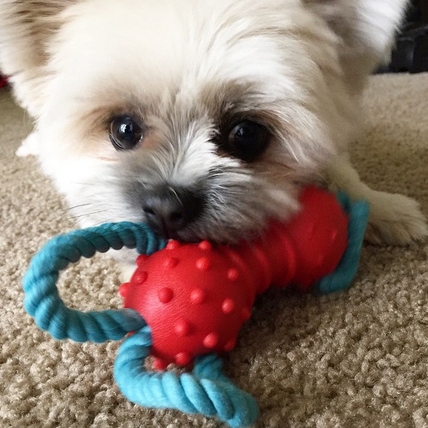 I think he likes his new toy!