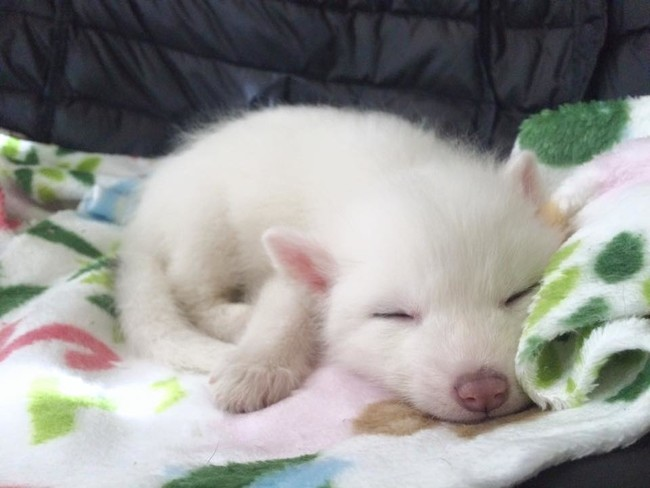 This is the baby fox of my dreams.