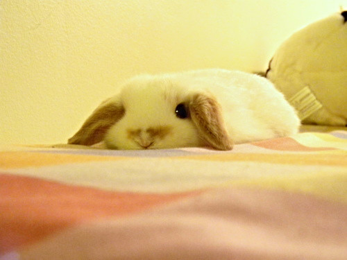 The very definition of floppy bunny.